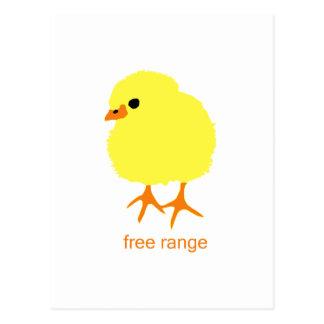 Free Range Chick Postcard
