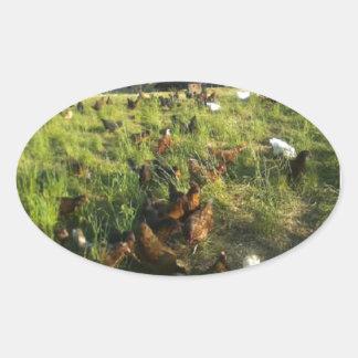 Free Range Hen Stickers
