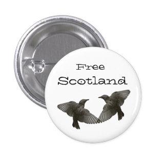 Free Scotland Starling Bird Pinback Pinback Button