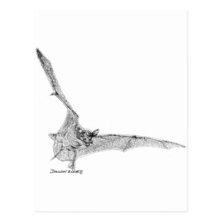 Free Tailed Bat Post Cards