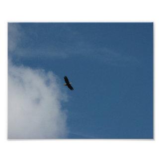 Freebird Photo Print