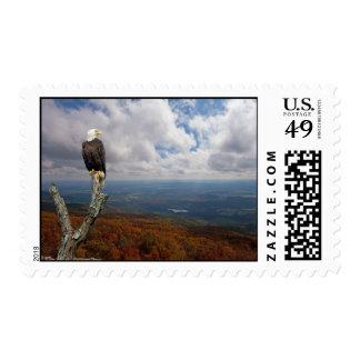 Freedom Eagle Postage Stamp