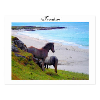 Freedom - Postcard