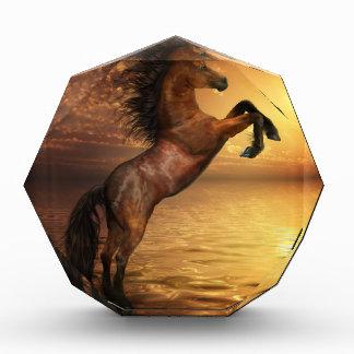 Freedom Rearing Wild Horse Award