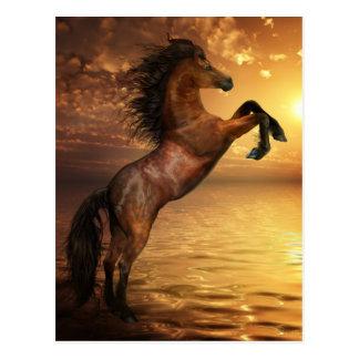 Freedom Rearing Wild Horse Postcard