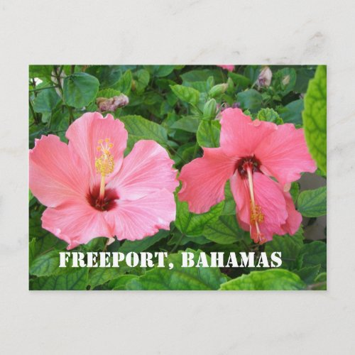 Freeport, Bahamas Postcard postcard