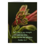 Freesia Blossoms Card