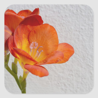 Freesia Flower Stickers with Copyspace