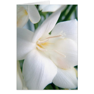 Freesia | White | Card