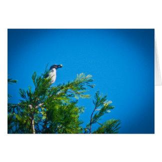 Fregar-Jay occidental en un árbol Tarjeta De Felicitación