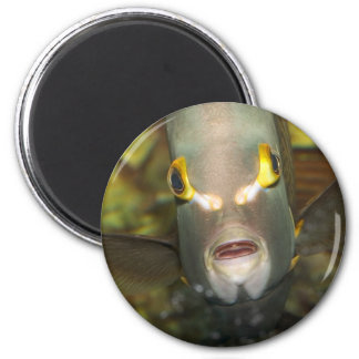 French Angelfish 2 Inch Round Magnet