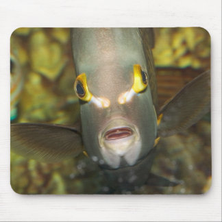 French Angelfish Mouse Pad