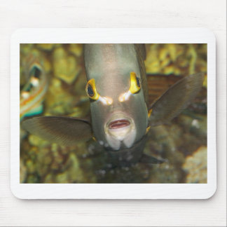 French Angelfish, with Caption Mouse Pad