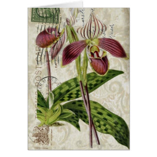 french botanical art shabby chic purple orchid card