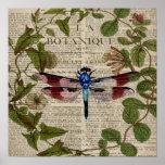 french botanical art vintage dragonfly poster