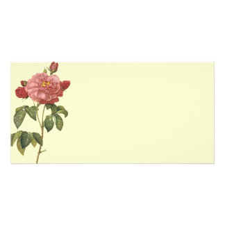 French Botanical Beauty *Vintage Flowers* Card