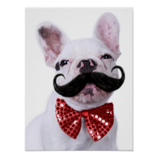 French Bull Dog Puppy With Mustache Poster