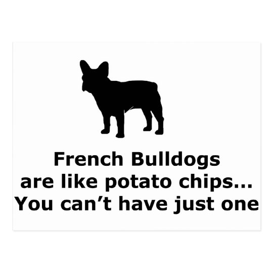 French Bull Dogs are like Potato Chips Postcard