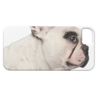 French Bulldog (4 years old) close-up iPhone 5 Case