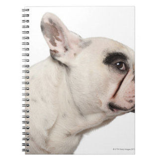 French Bulldog (4 years old) close-up Spiral Notebooks