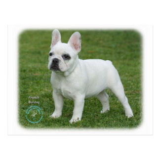 French Bulldog 9K068D-02 Post Cards