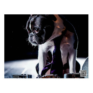 French Bulldog Amateur Photographer Dog Postcard
