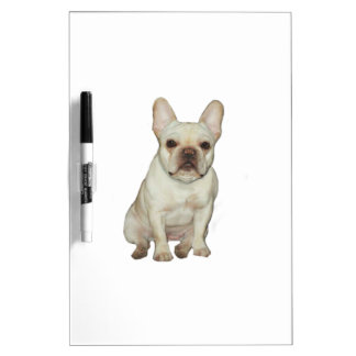 French  Bulldog (B) - fawn Dry-Erase Boards