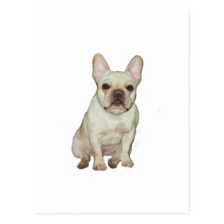 French  Bulldog (B) - fawn Postcards
