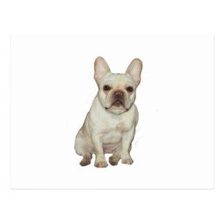 French  Bulldog (B) - fawn Postcard