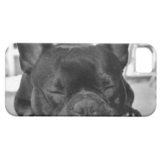 French Bulldog Blackberry Bold Case