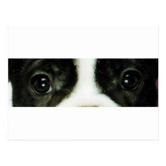 french bulldog brindle and white eyes postcard