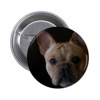 French Bulldog Buttons