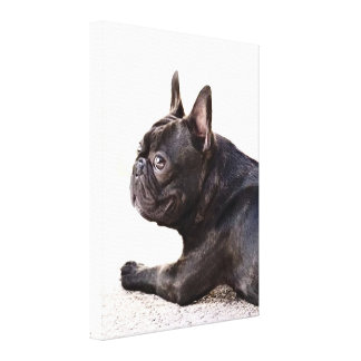 French Bulldog Stretched Canvas Print
