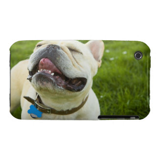 French Bulldog Case-Mate iPhone 3 Cases