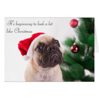 Bulldog Christmas Cards - Invitations, Greeting & Photo Cards | Zazzle