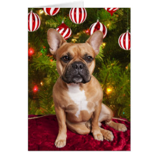 French Bulldog Christmas Cards - Invitations, Greeting & Photo ...
