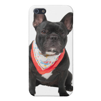 French Bulldog, dog cute beautiful photo, gift Case For iPhone SE/5/5s