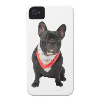 French Bulldog, dog cute beautiful photo, gift iPhone 4 Case