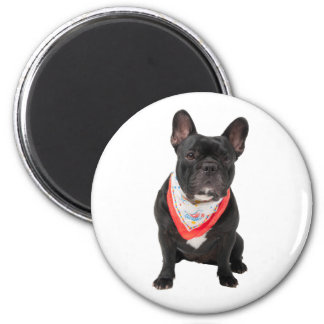 French Bulldog, dog cute beautiful photo, gift Magnet