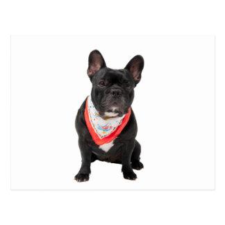 French Bulldog,  dog cute beautiful photo Post Card