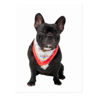 French Bulldog,  dog cute beautiful photo Postcards