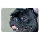 French Bulldog dog Flexible Magnets