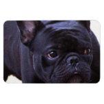 French Bulldog dog Rectangular Magnet