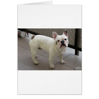 French_Bulldog full.png Card