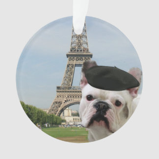 French Bulldog in paris