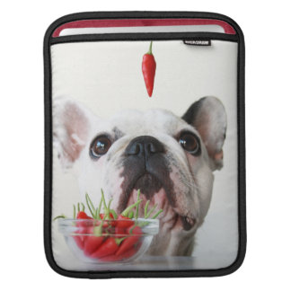 French Bulldog Looking At A Red Pepper Sleeve For iPads