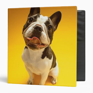 French Bulldog Looking Up Binder