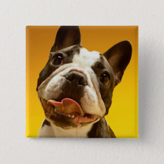 French Bulldog Looking Up Button