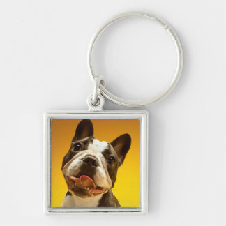 French Bulldog Looking Up Keychain