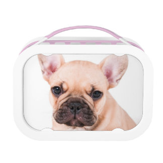 French bulldog. lunch box